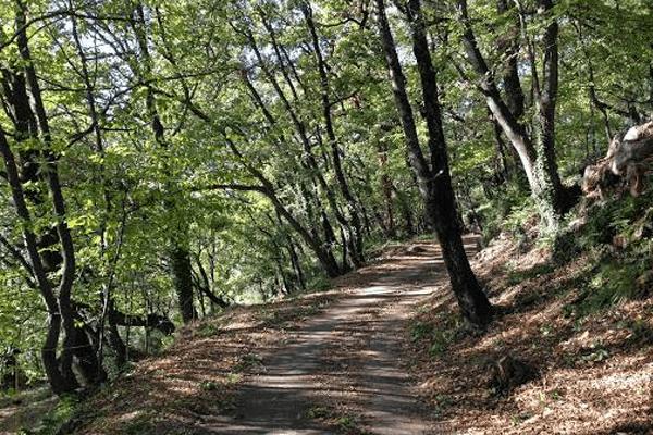 Årstiderne i Provence efteråret gåtur i skov lidt væk fra Villa Romarine.