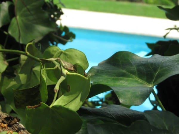 Ferie i Provence, grøn udsigt udover poolen ved Villa Romarine i Sydfrankrig lidt nord for Nice. Lej det via KKP Provence