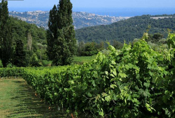 Ferieaktiviter ved Nice, Villa ROmarine Provence Sydfrankrig
